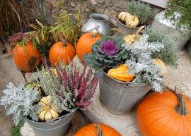 Herbstlicher Shabby Chic in Zinkgefäßen