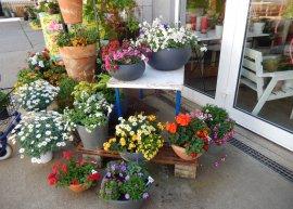 Blumen zu Muttertag
