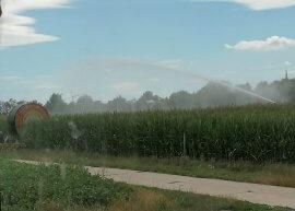 Maislabyrinth wird bewässert